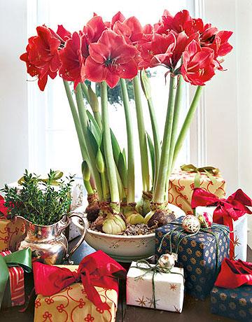 flores en navidad-3