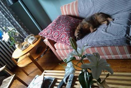 Mascotas disfrutando la decoración 12