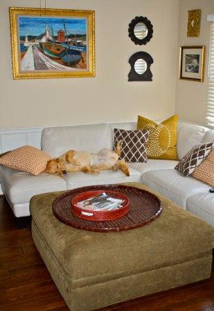 Mascotas disfrutando la decoración 2