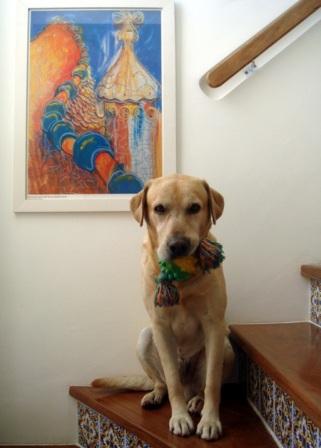 Mascotas disfrutando la decoración 6