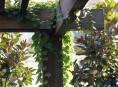 imagen Un patio en la terraza