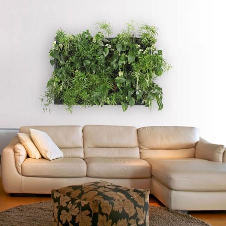 Un jard n en las paredes for Jardines en paredes