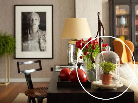 Decora tu hogar con terrarios for Como decorar tu hogar