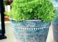 imagen Objetos para decorar tu hogar: Mini jardín