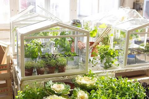 Mini invernaderos de Ikea para el hogar 1