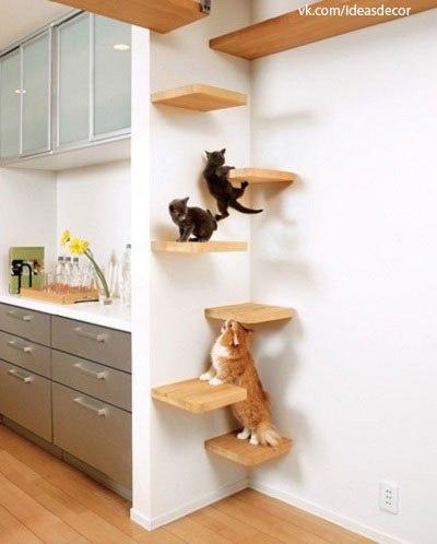 Ideas para gatos 1