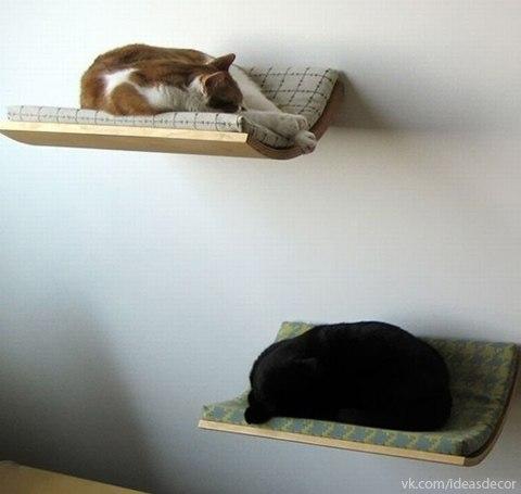 Ideas para gatos 2