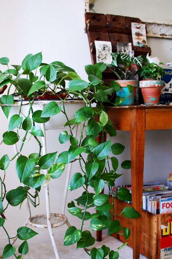 Cinco consejos para decorar con plantas 5