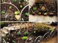 imagen Ideas para decorar tu jardín con ruedas de bicicletas