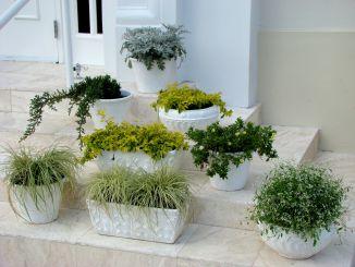 Rincones para tus plantas de interior for Plantas de interior muy duraderas