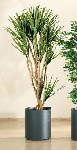 Rincones para tus plantas de interior - Macetas para plantas de interior ...