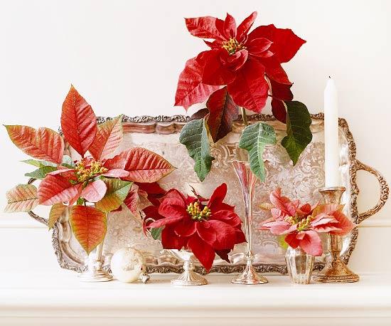 Arreglos navide os con flor de pascua for Arreglos navidenos para mesa