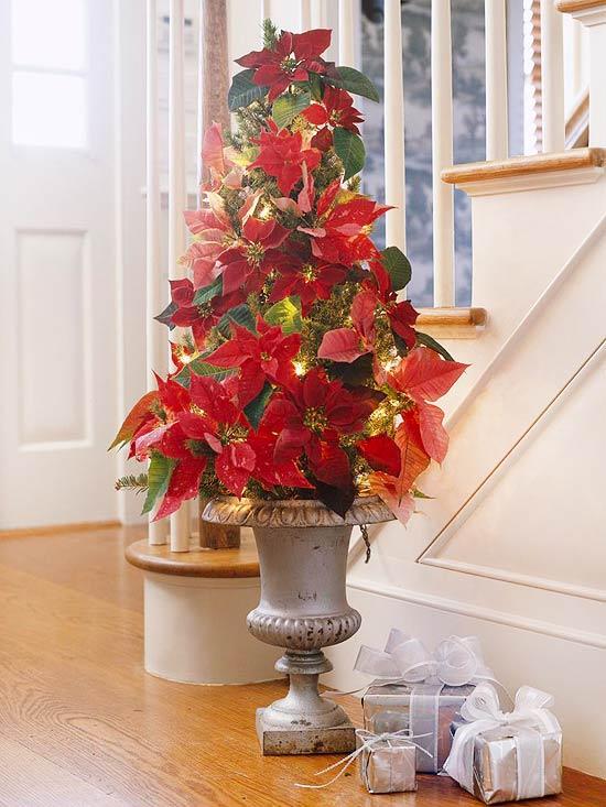 Arreglos navide os con flor de pascua for Adornos con plantas de nochebuena
