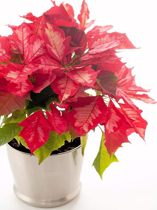 Arreglos florales navideños 7