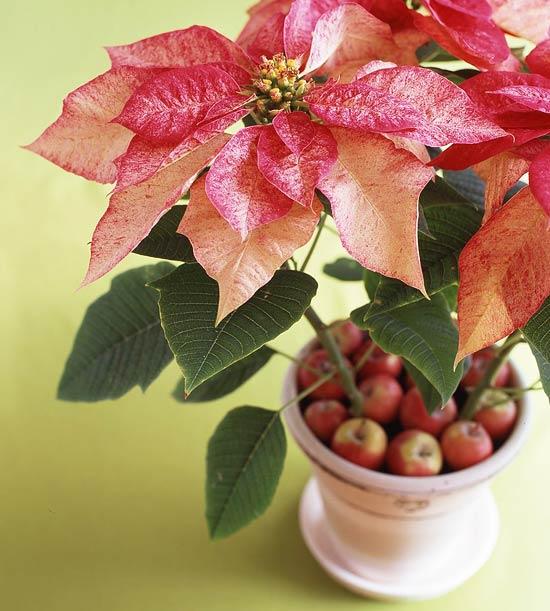 Arreglos florales navideños 9