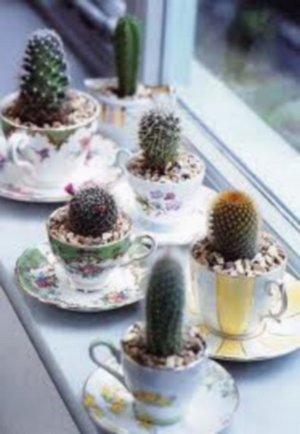 Decorar con cactus 2