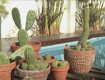 Cactus decorativos for Articulos decorativos para jardin