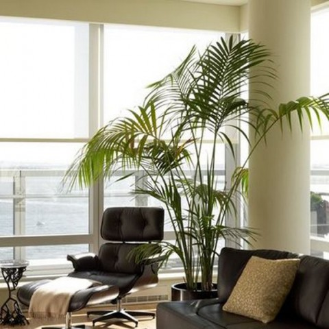 Decoraci n de salones con plantas de interior - Plantas grandes de interior ...