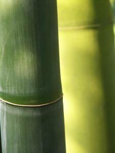 Suelos de bambú2