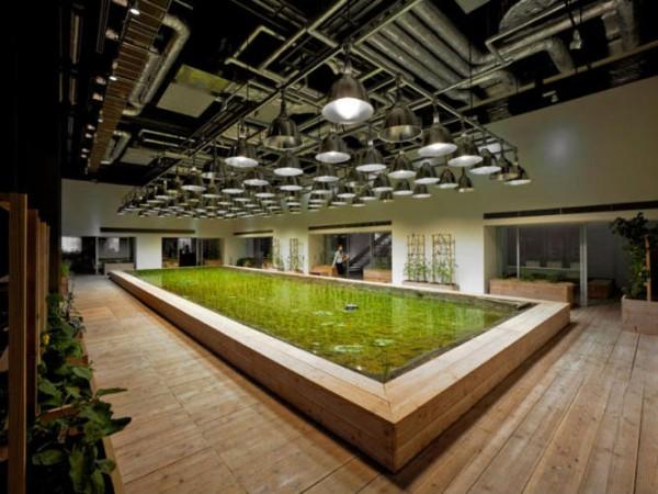 Empresas ecológicas 2