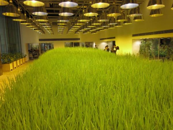 Empresas ecológicas 3