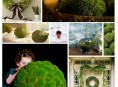 imagen Inspiradores centros de mesa decorados con musgo