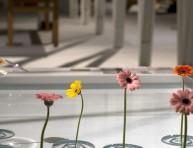 imagen Soporte flotante para flores de Oodesign