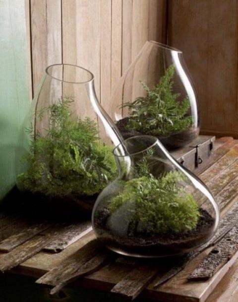 Ingeniosas decoraciones de interior con terrarios for Decoracion con plantas miniatura