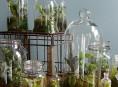 imagen Ingeniosas decoraciones de interior con terrarios
