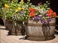 imagen Decoración de jardines: macetas con barriles de vino