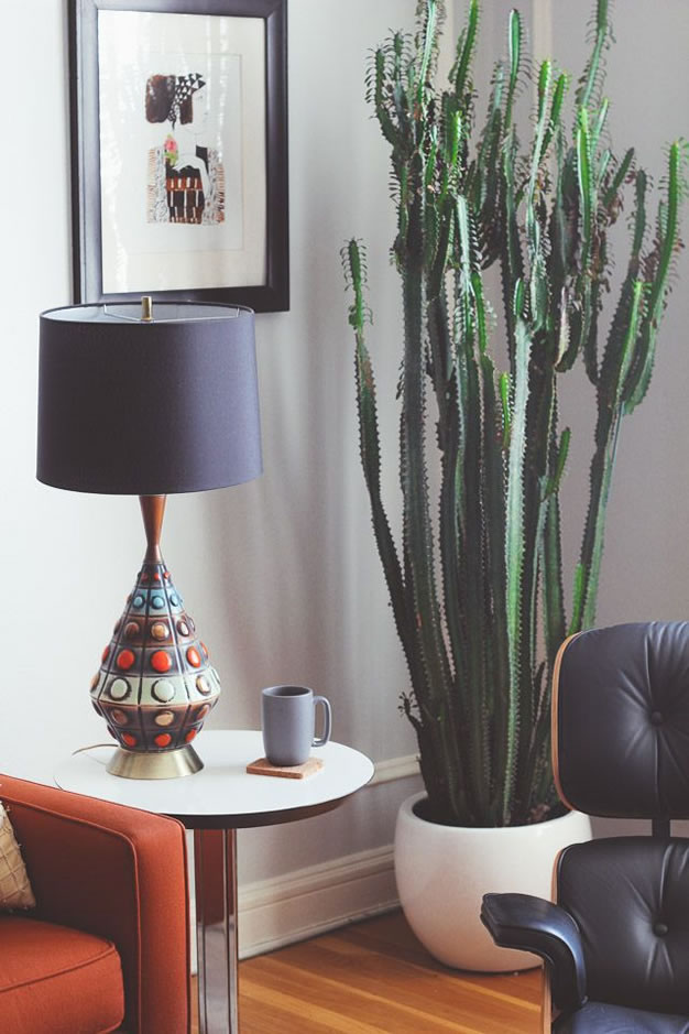 cactus y terrarios