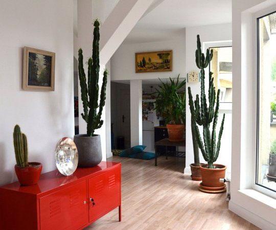 Cactus y terrarios 15