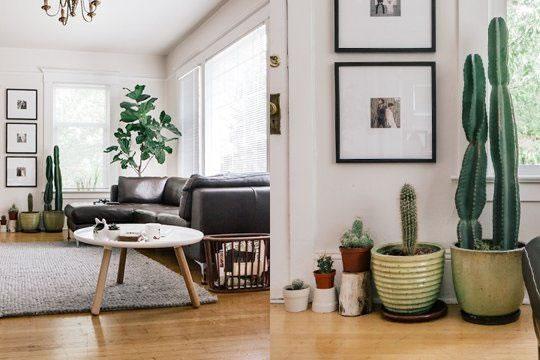 Cactus y terrarios 19