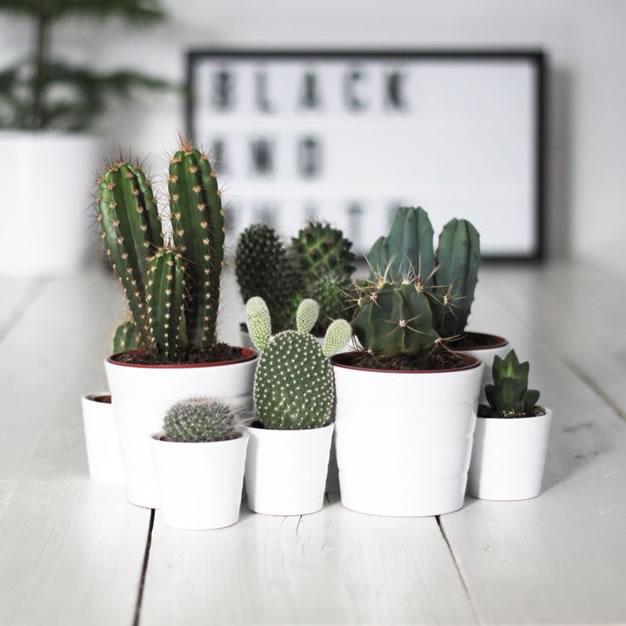 Cactus y terrarios 2