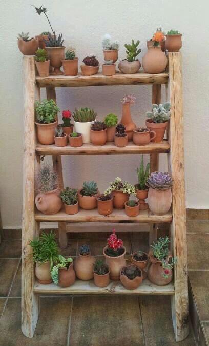 Cactus y terrarios 4
