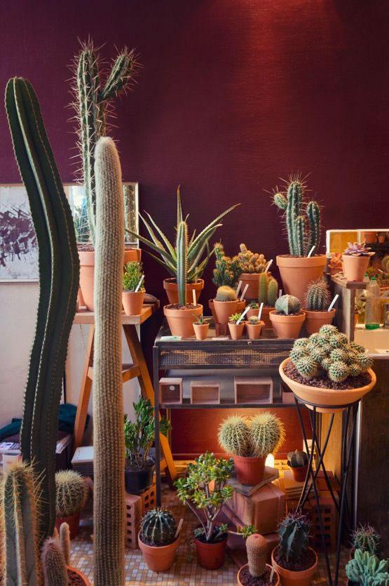 Cactus y terrarios 6