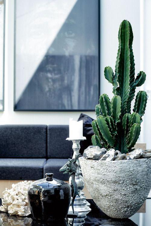Cactus y terrarios 8