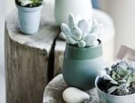 imagen Decora tu hogar con suculentas