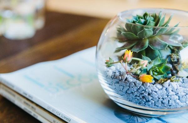 Consejos para decorar con terrarios for Decoracion para terrarios