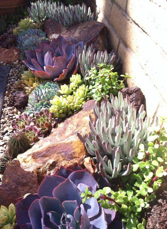 los cactus y suculentas grandes sobre un suelo de aspecto natural con guijarros recrea un ambiente desrtico