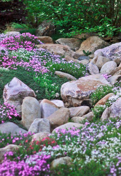 en este estilo el tipo de plantas suelen ser de crecimiento rastrero y grandes productoras de pequeas flores el gnero androsace nos ofrece una gran