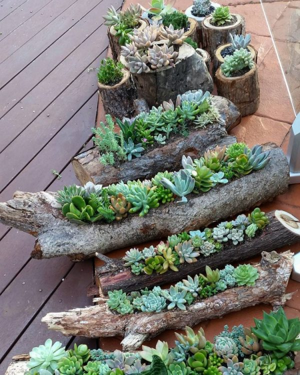 vaciar troncos y ramas para usarlos como jardineras para nuestras suculentas es otra solucin muy esttica