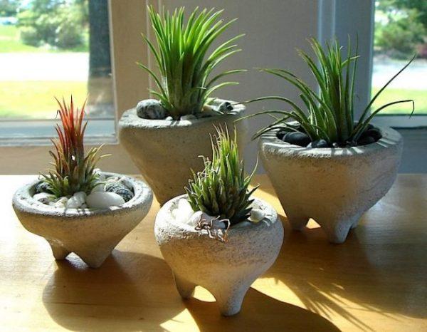18 jardines en miniatura para decorar toda tu casa for Tipos de plantas para decorar interiores