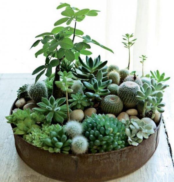 18 jardines en miniatura para decorar toda tu casa
