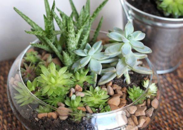 una de las grandes ventajas de tener un terrario de suculentas es el poqusimo mantenimiento que requieren este tipo de plantas - Jardines En Miniatura