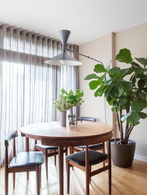 el comedor es otro gran lugar para una planta de interior grande se puede tener una junto a la ventana o en una esquina de la habitacin