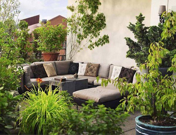 C mo decorar el patio o la terraza con plantas - Plantas para patio ...