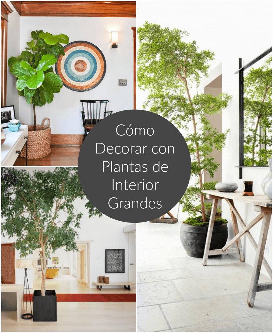 Gu a para decorar decoraci n de interiores ideas y - Plantas interior grandes ...