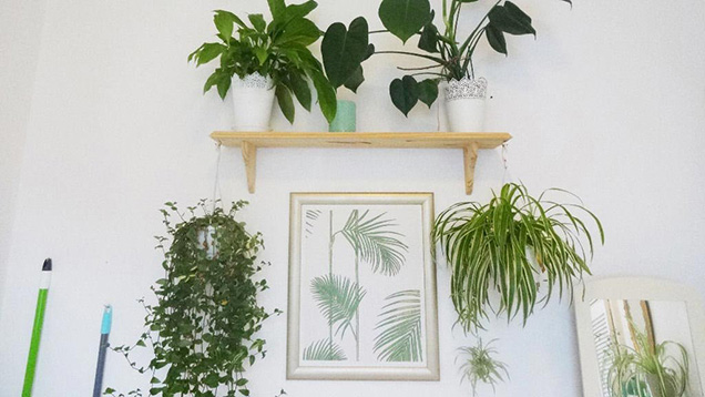 7 formas de decorar con plantas de interior for Plantas decorativas para interiores