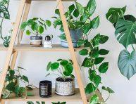 imagen 7 formas de decorar con plantas de interior